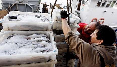 La nueva ley plantea sanciones por no desembarcar todo lo que se pesque.