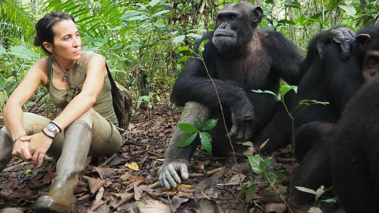 Atencia junto a tres chimpancés en el centro de rescate de Tchimpounga (Congo). Allí se intenta reintroducir a los animales en la selva, tras sufrir experiencias traumáticas, dado que es una especie amenazada en África por los cazadores y el tráfico ilegal