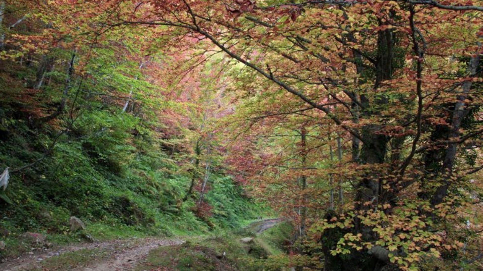 Bosque de Montegrande