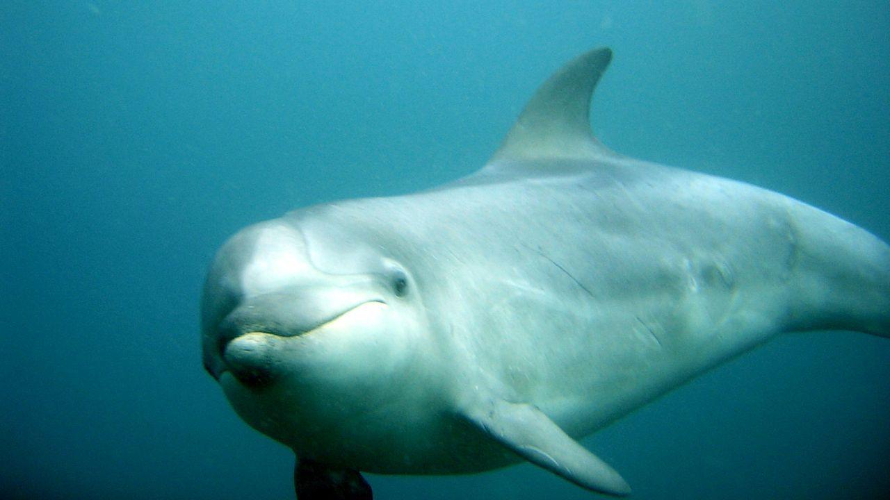 Años atrás un delfín se instaló en A Mariña lucense, donde interactuaba con pescadores, buceadores y gente desde los muelles