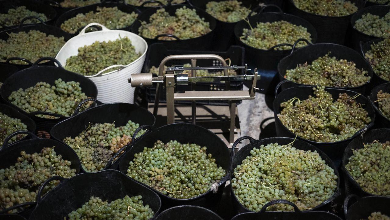 El sector vitivinícola es clave en la economía ourensana