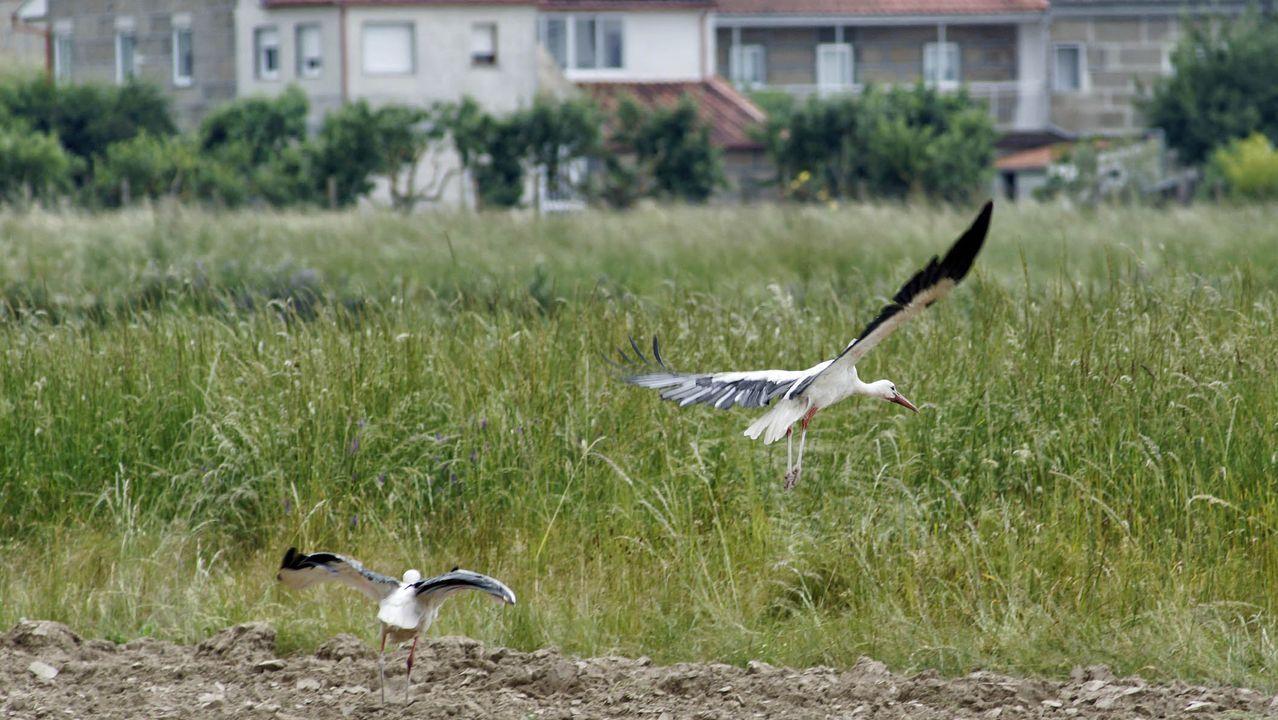 La xesta de Ons florece por mayo.El Aula da Natureza anima a observar aves