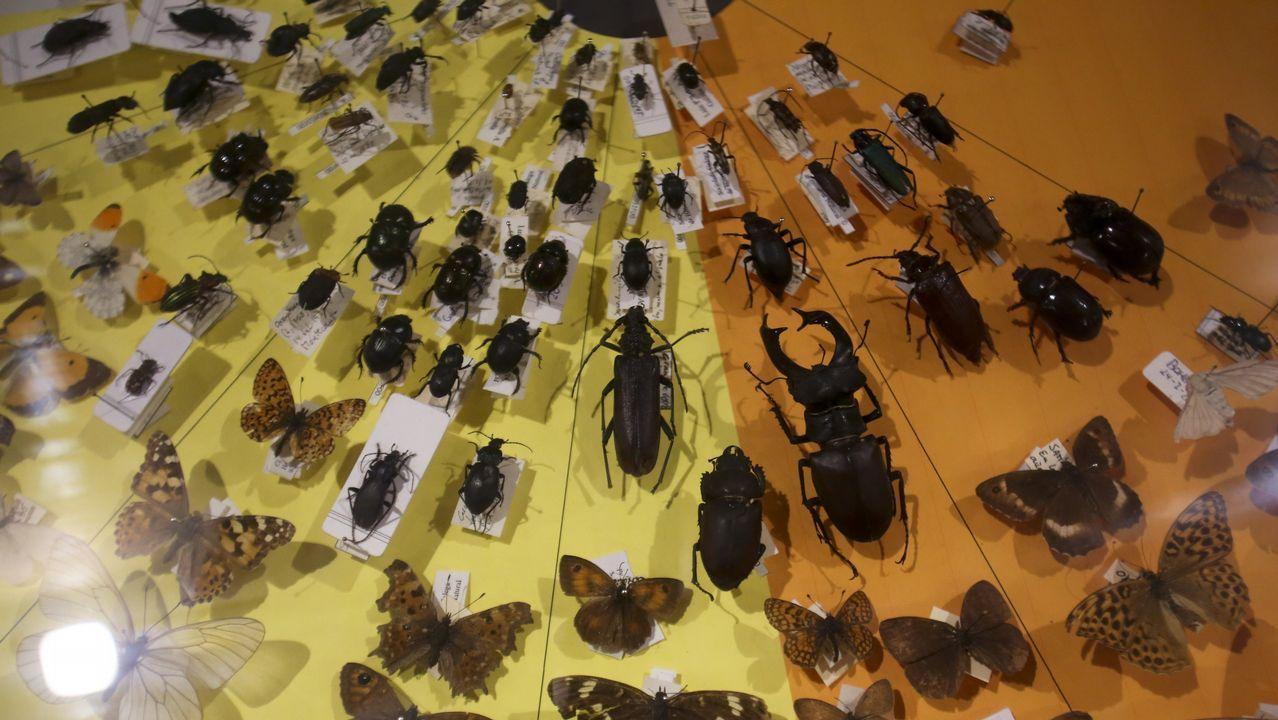 El Museo da Natureza cuenta con una importante colección de mariposas e insectos
