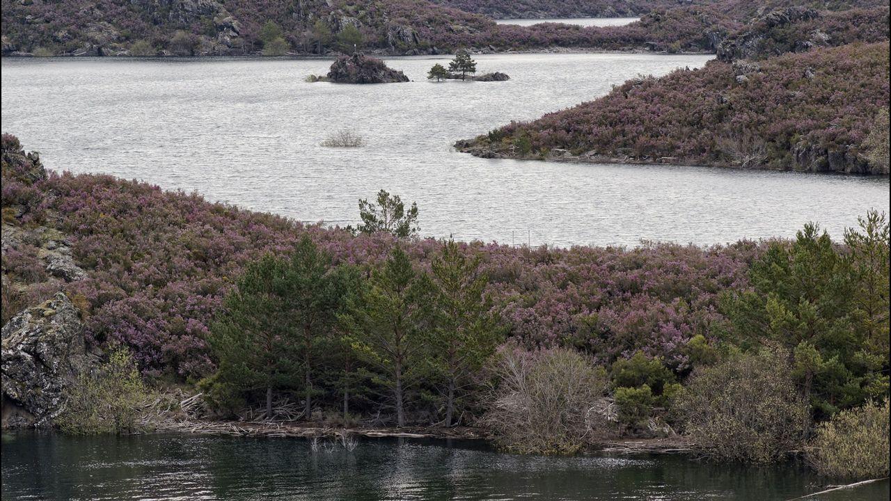 La montaña gallega, nevada.Hay nivel verde de circulación en la A-52 a su paso por A Mezquita, A Gudiña, Riós y Vilardevós