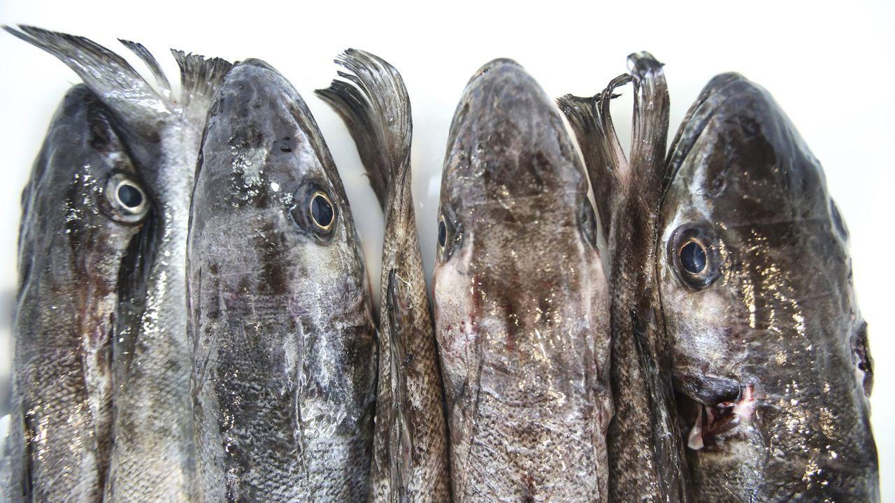 Un furtivo sorprendido pescando hace escasos días.