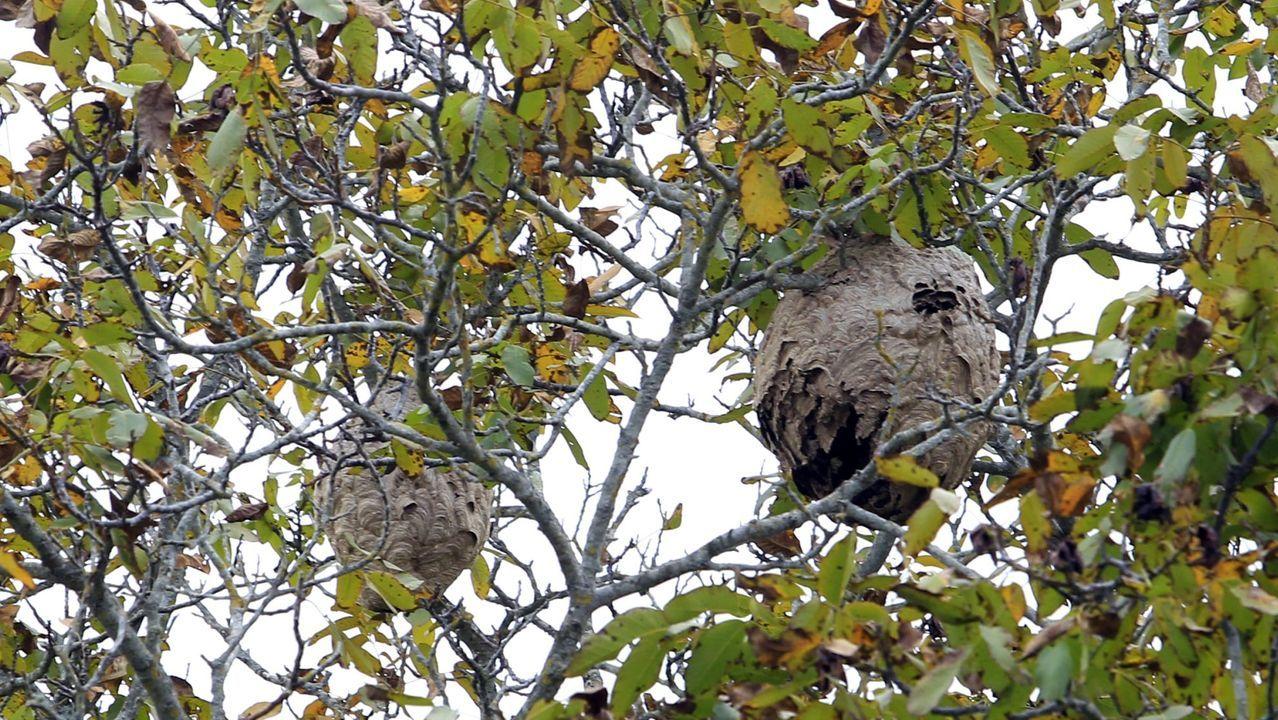 Los refugios para las aves migratorias en las Rías Baixas.Mirador geológico de As Fontes, en el municipio de Ribas de Sil