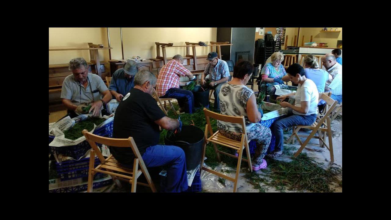 Foto de archivo de los preparativos para elaborar la alfombra de Santa Eufemia en Trasbar, Cervo