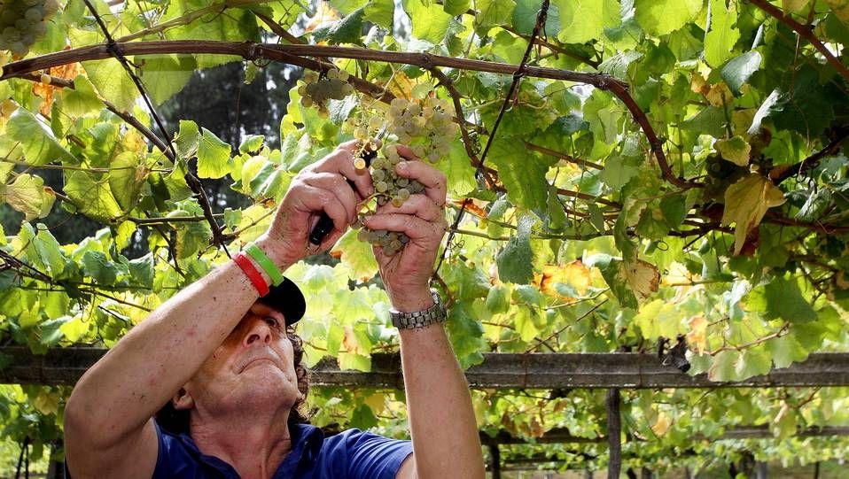 Los vinos de Rías Baixas pasan por rigurosos controles de calidad que arrancan en la inspección de las parcelas y el estudio pormenorizado de cada viñedo y finalizan cuando llegan a la botella.