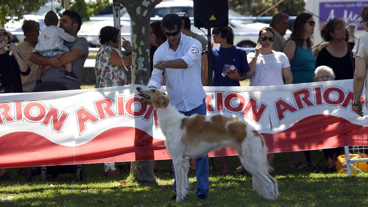 Concurso nacional canino en Porto do Son