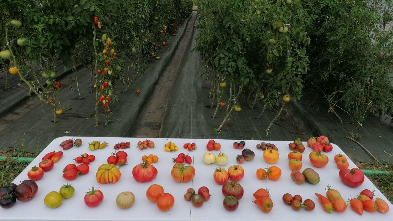 Algunas de las variedades que tiene catalogadas Chema, expuestas junto a la plantación