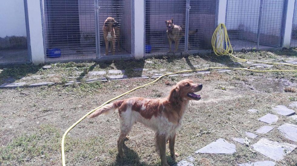 Perros custodiados en el refugio de animales de Quiroga, el único municipal de la provincia de Lugo