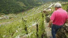 El granizo arrasa los viñedos en la mayor ribera de Chantada.Flores en el exterior del colegio en el que estudiaba el menor fallecido, esta mañana