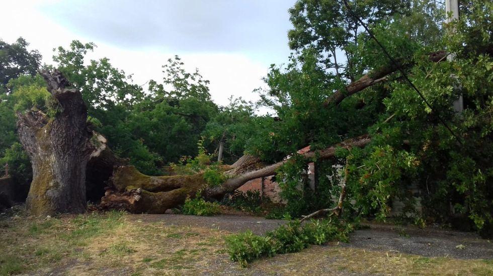 Las secuelas de la tormenta en el sur de Lugo.Agentes del Seprona y de Medio Ambiente, en la aldea de Sober en la que se produjo el suceso