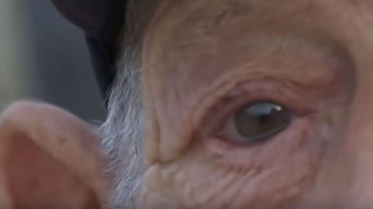 El vídeo de dos gijonesas que se ha vuelto viral