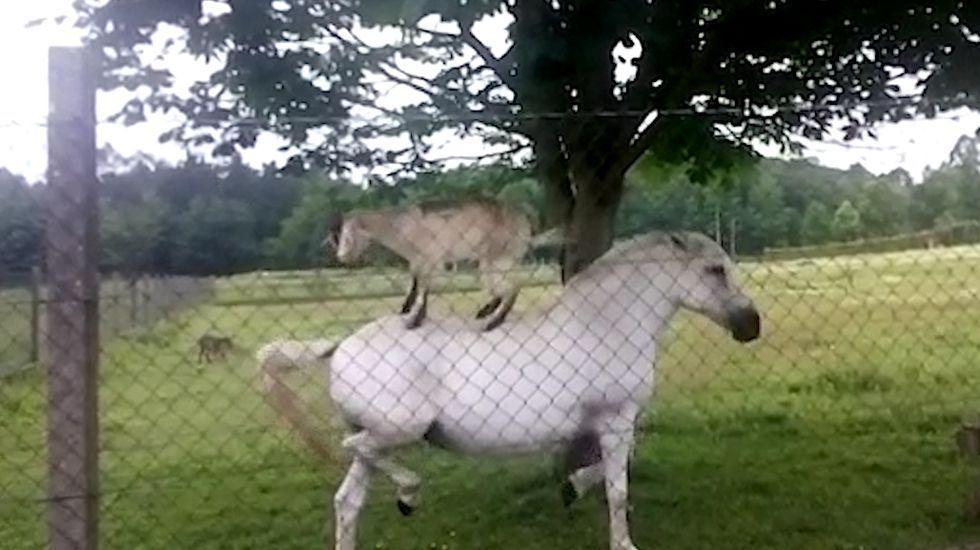 Colaboración animal en Rois