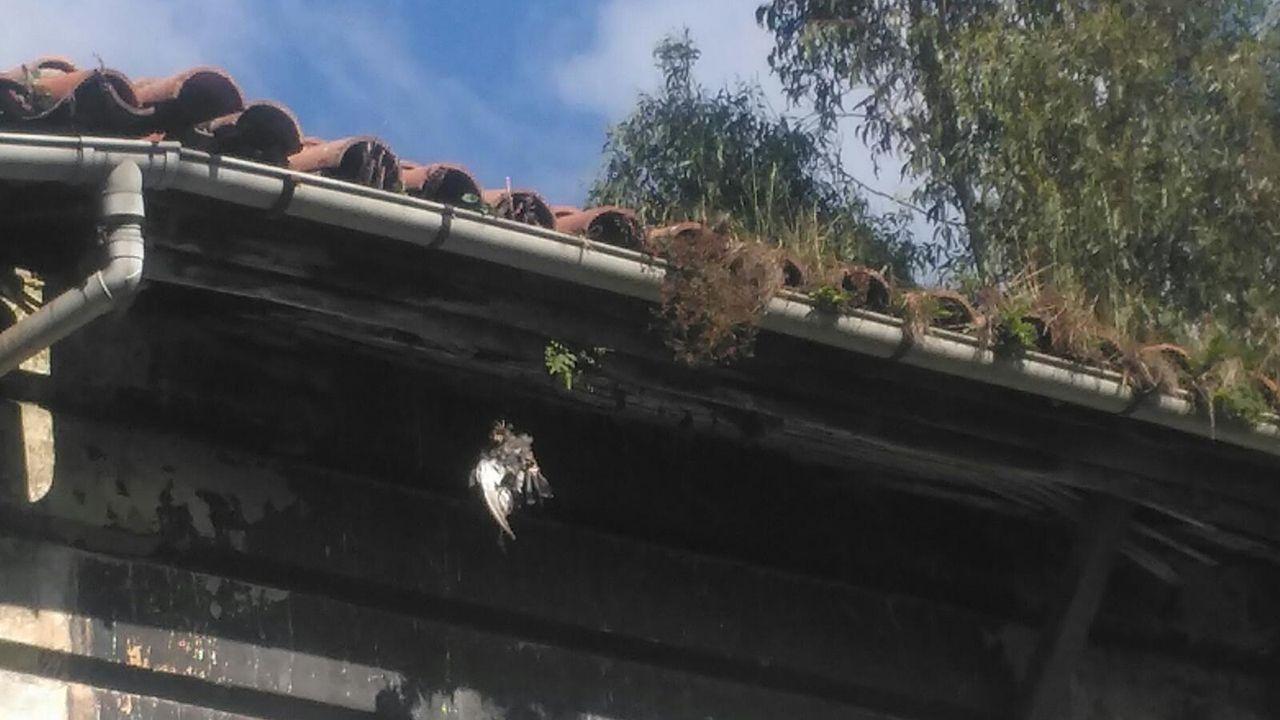 Un aspecto del tejado de la casa abandonada en la calle Menéndez Pelayo de Oviedo, por la que se quejan los vecinos de Ciudad Naranco