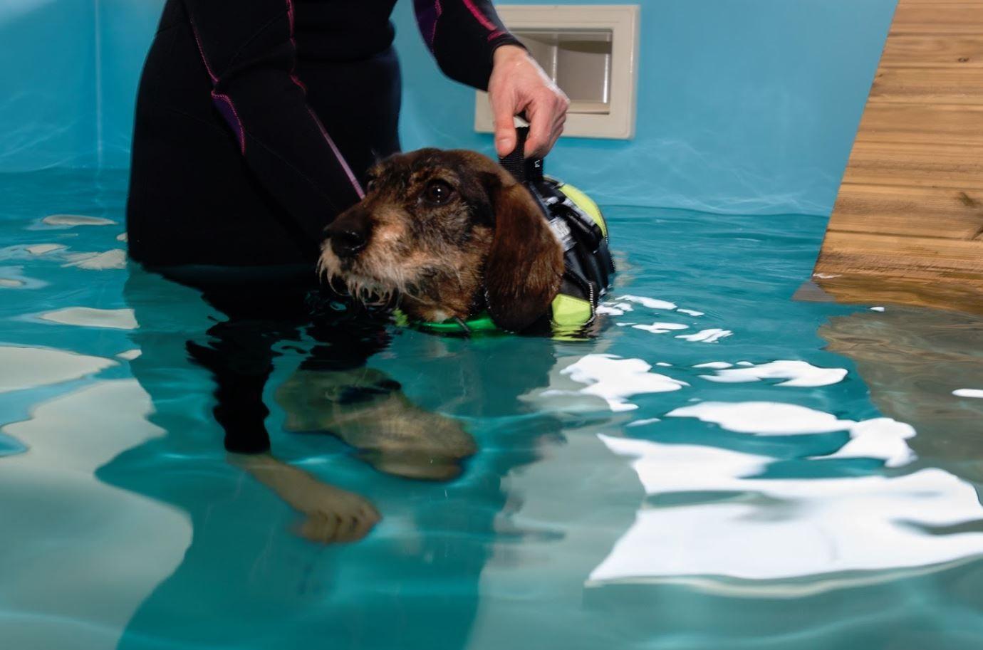 Un perro en la piscina del hospital clínico veterinario Cuatro de Octubre, en Meicende (Arteixo)