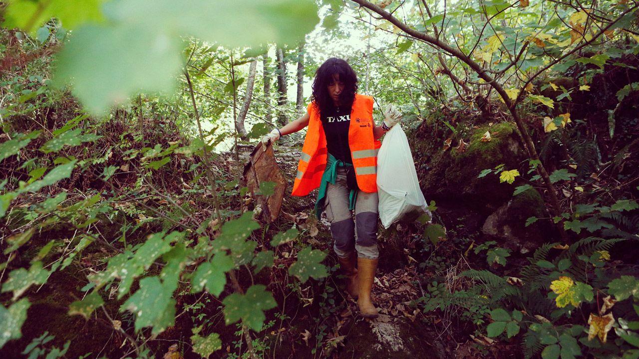 Oviedo impulsa el reciclaje.Una voluntaria participa en uno d elos programas de COGERSA para limpiar un monte en Asturias