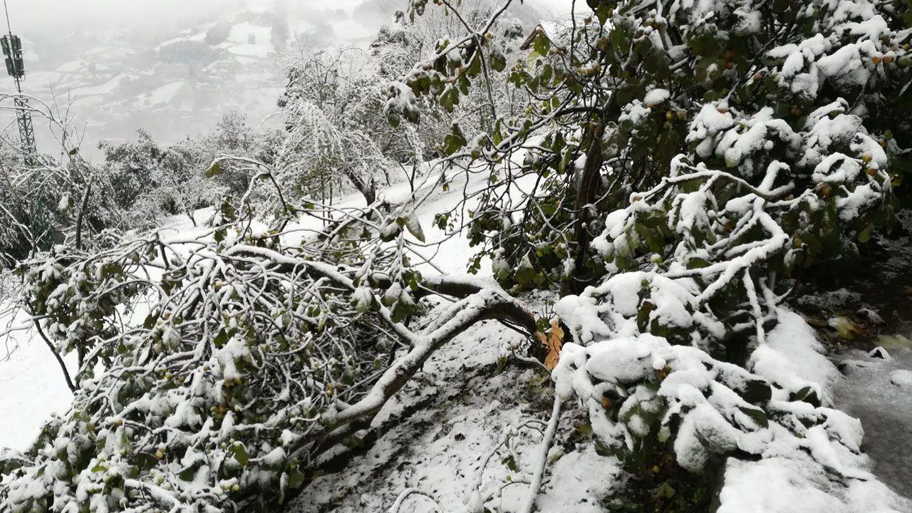 Bonita estampa invernal en El Colláu, los árboles cubiertos de nieve