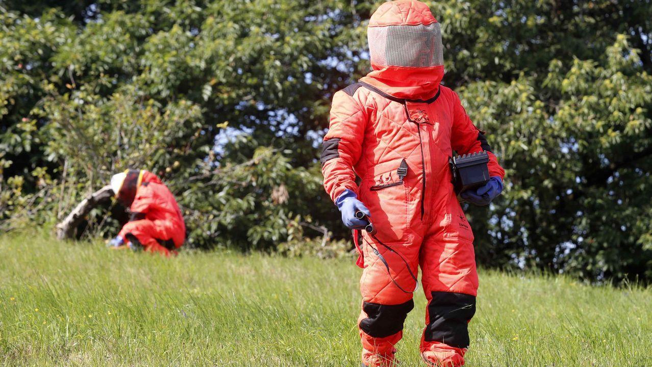 Trabajadores del Serpa eliminan nidos de avispa asiática con explosivos