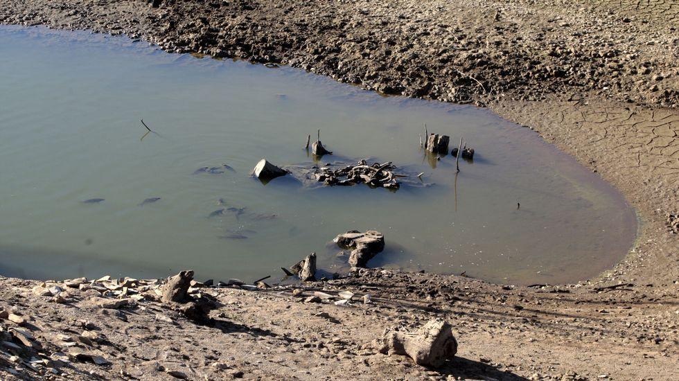 Lugar al que ha retrocedido la cola del embalse en el ramal del arroyo Rego das Laceiras, en la parroquia de Eirexalba. En el agua se ve un grupo de peces de gran tamaño, probablemente carpas