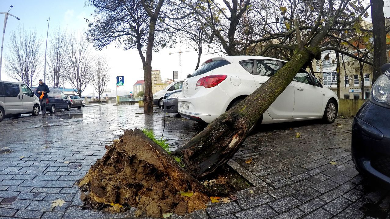 Árbol caído en O Berbés, en Vigo