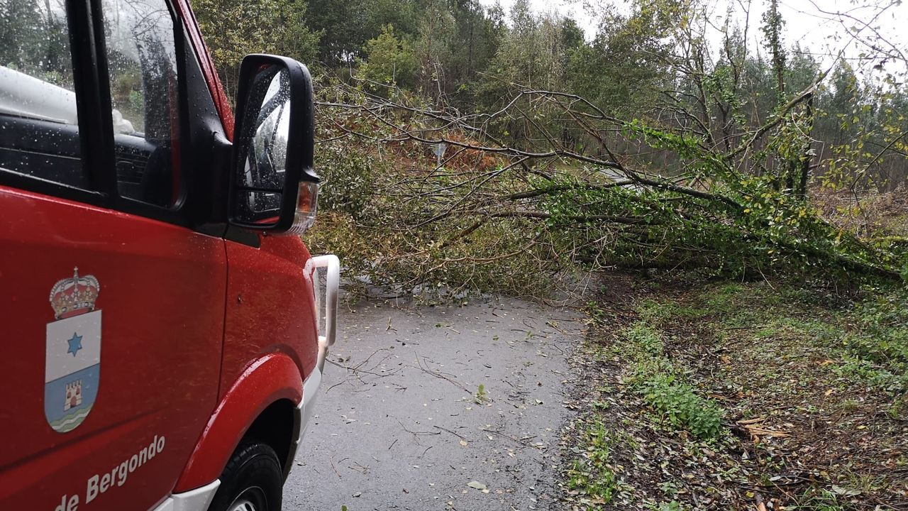 Protección Civil de Bergondo, retirando uno de los árboles caídos
