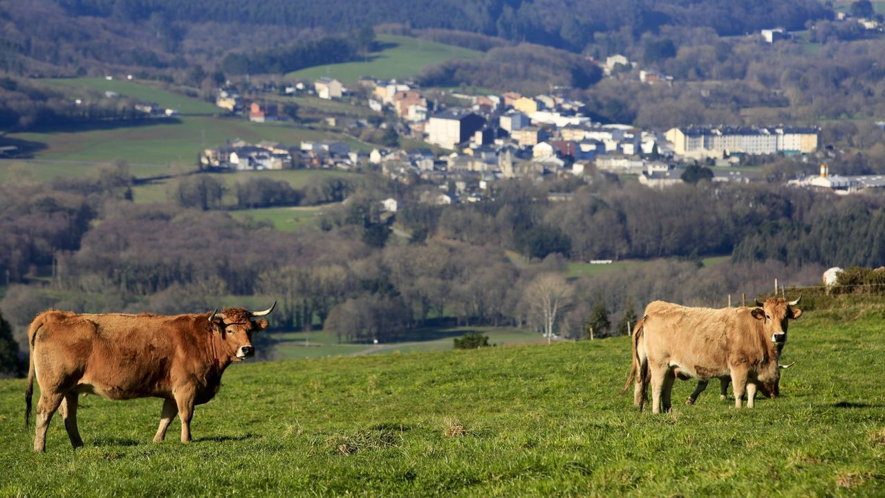 El sector ovino es uno de los grandes damnificados