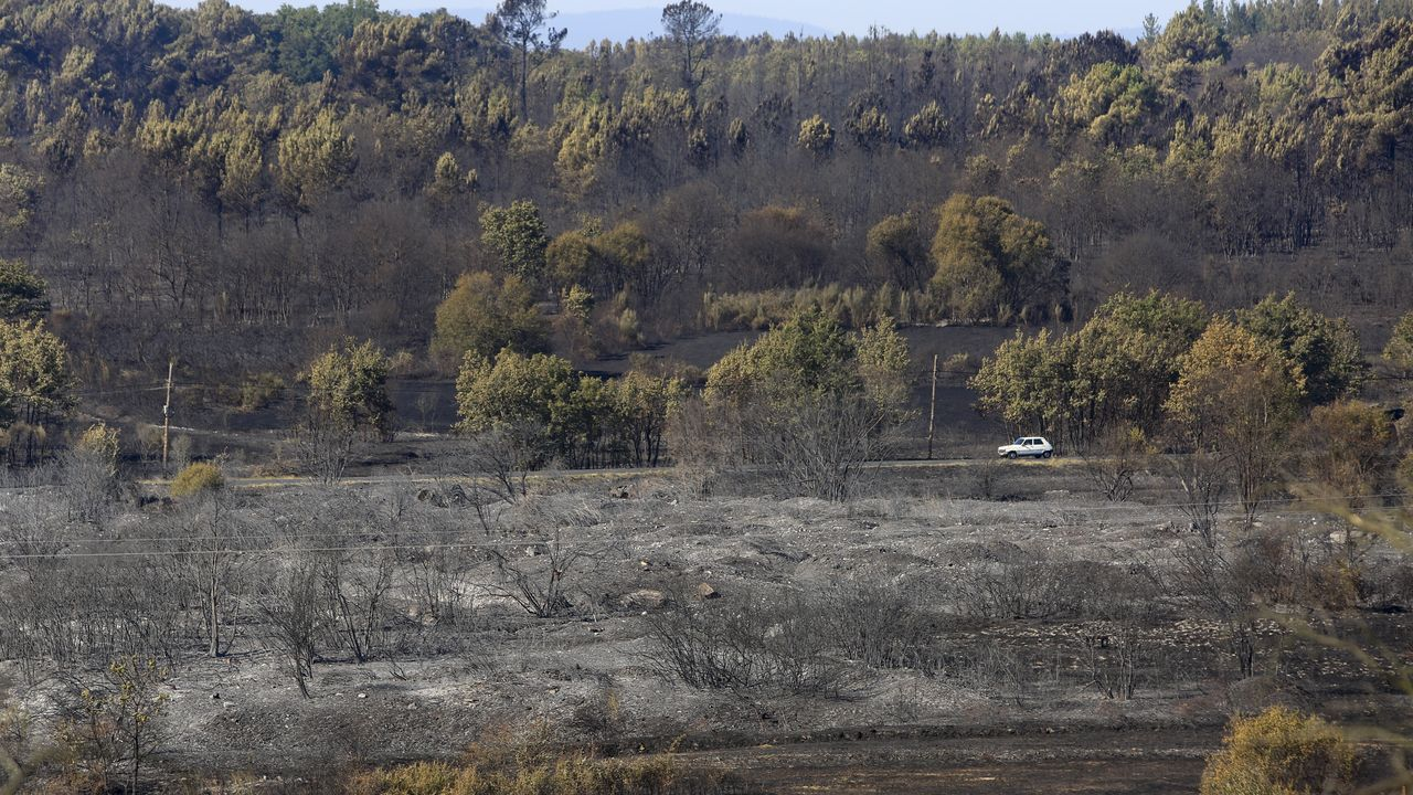 En Monforte el fuego ha arrasado 430 hectáreas