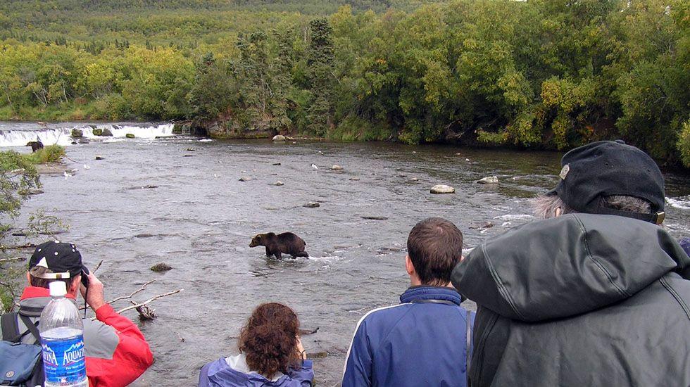 Turismo de avistamiento de osos en Estados Unidos.Turismo de avistamiento de osos en Estados Unidos