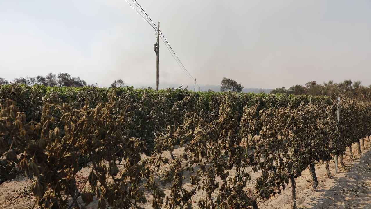 Las imágenes del incendio de Monterrei.El incendio en Moreiras, Toén, se inició el viernes