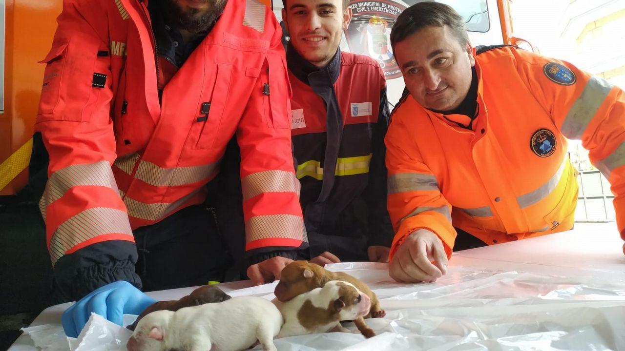 La protectora de Vilagarcía recibe 20 cachorros abandonados en una semana