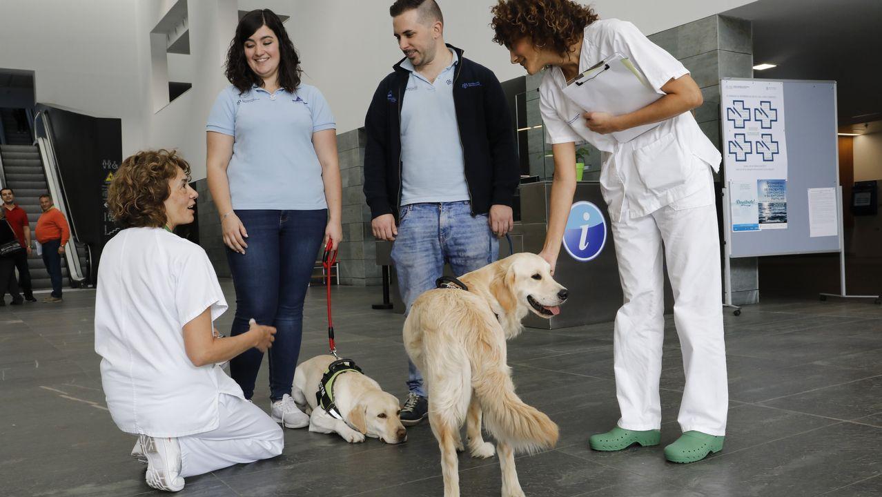 Perros de la unidad de investigación de terapia ocupacional de A Coruña