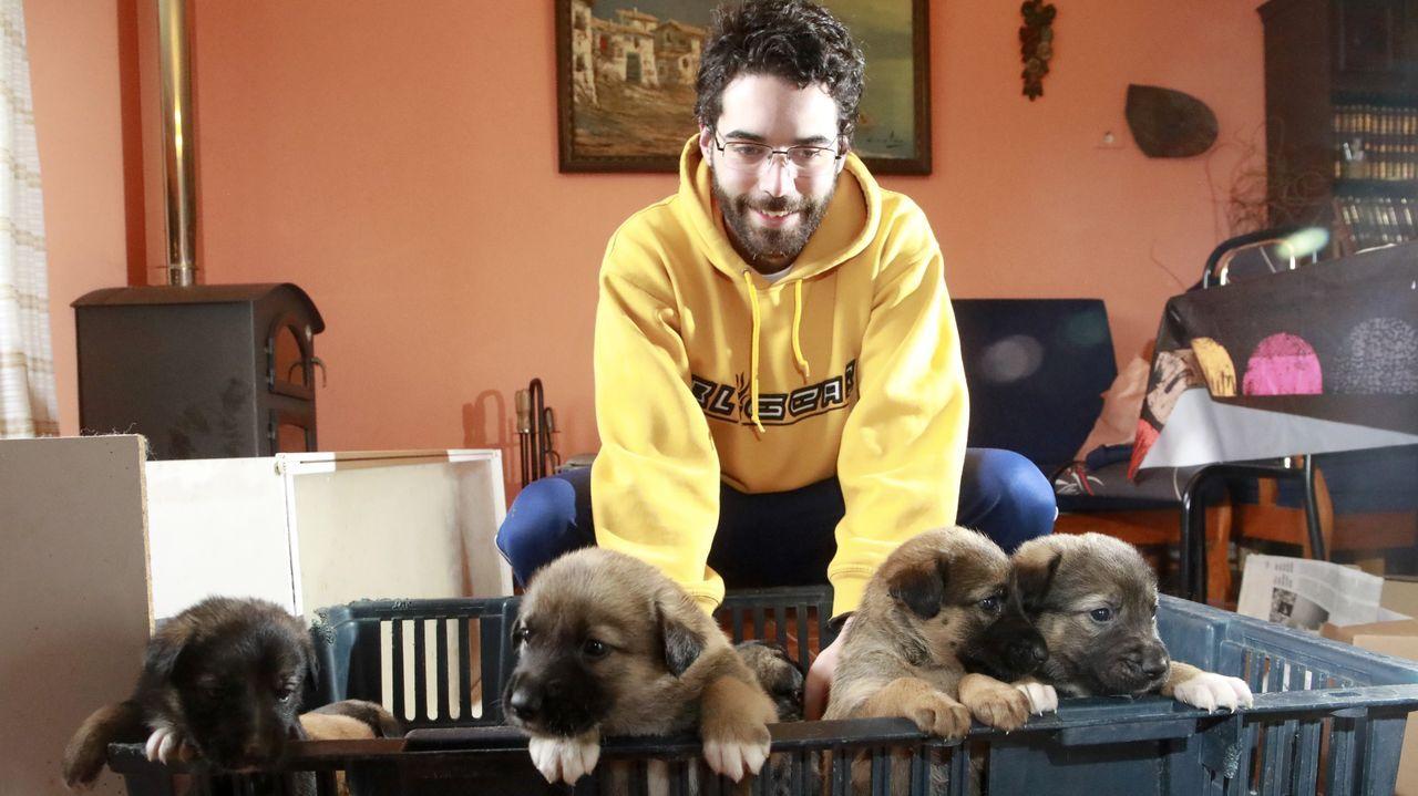 Estos siete cachorros buscan hogar.Inspección del narcosubmarino en las instalaciones de la Zona Franca de Vigo