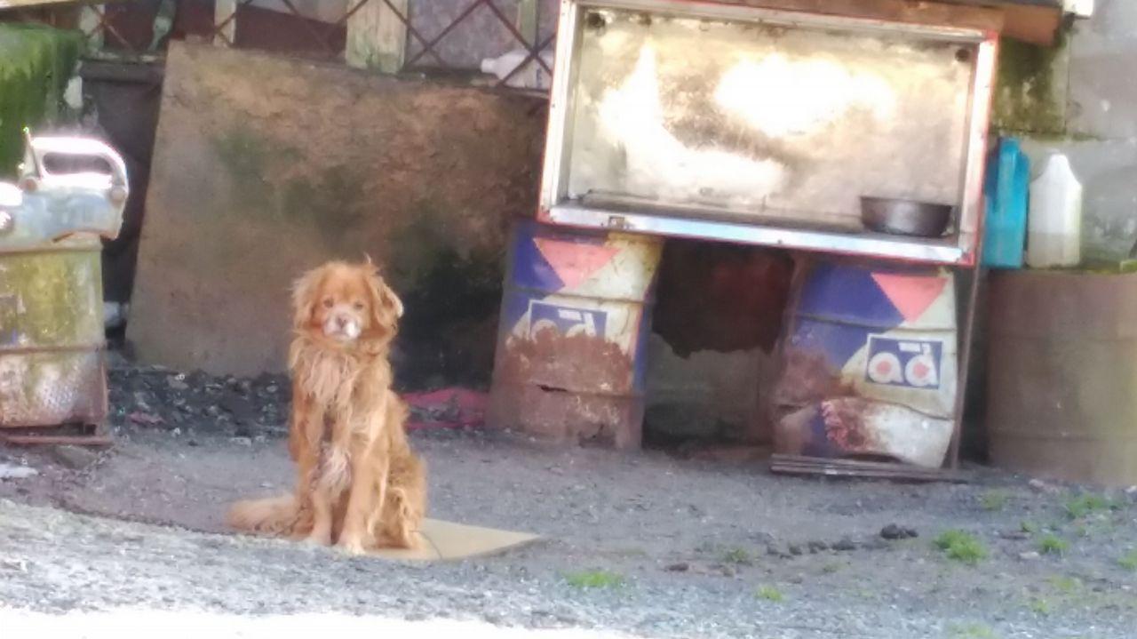 Multas de cinco mil euros por tener animales encadenados.El jugador venezolano maltratando al animal