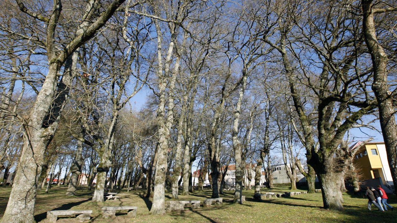 Los socialistas consideran que los árboles de las devesas de Escairón -en la imagen- y Currelos necesitan más cuidados para garantizar su conservación