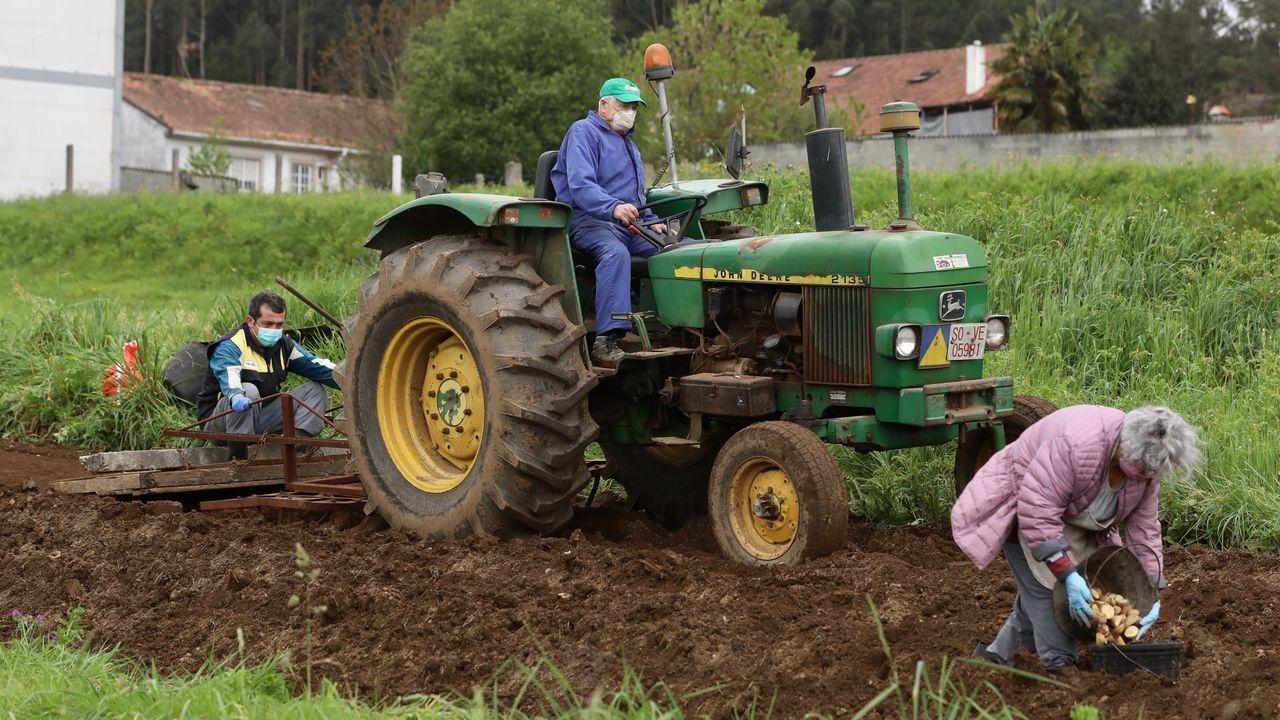 Agricultores plantando patatas, equipados con guantes y mascarillas frente al coronavirus