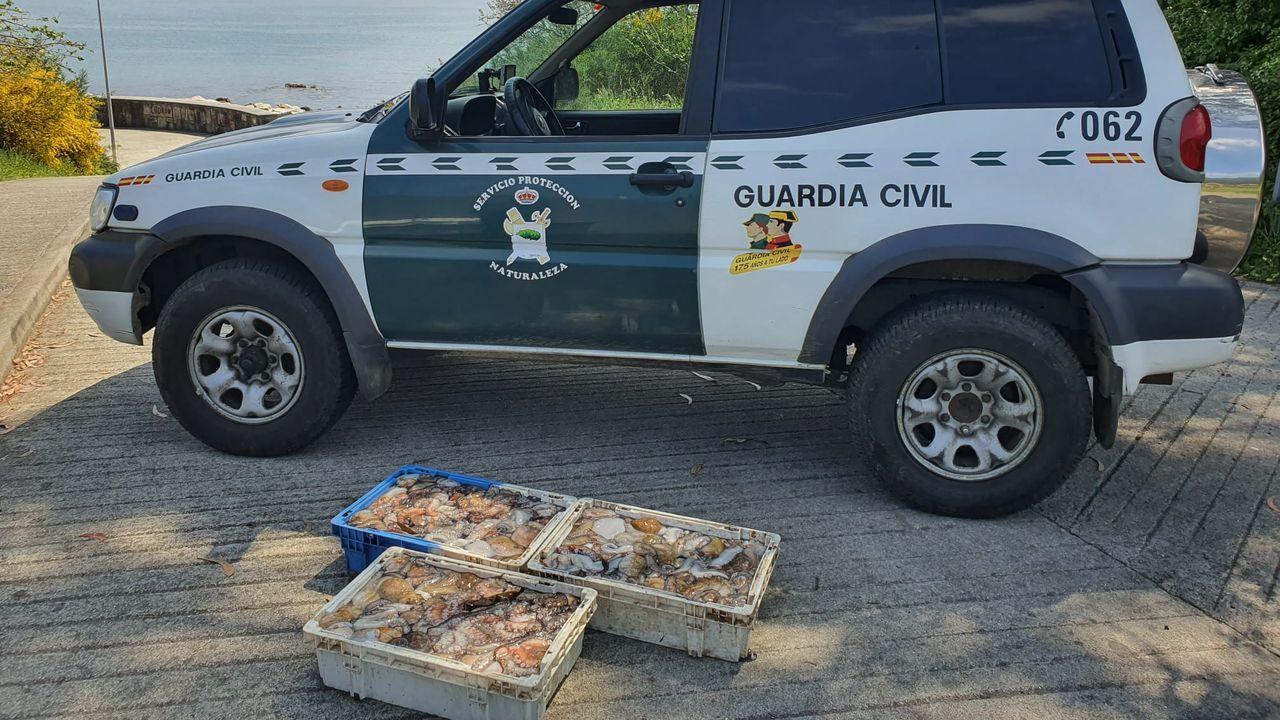 Aparece una quenlla en la playa de Quenxe, Corcubión.Procesión del Carmen en Camariñas, en una imagen de archivo