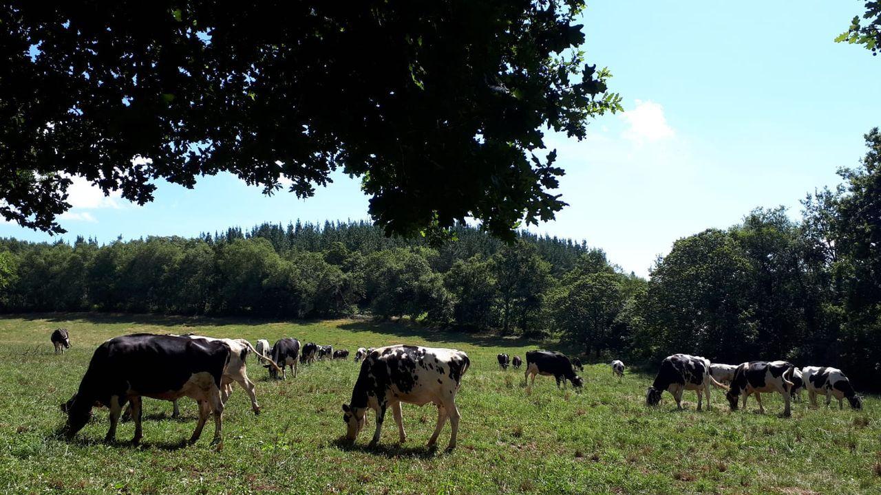 La ganadería en extensivo, como la que practica esta granja ecológica de Baralla, es uno de los modelos que pretende impulsar la UE