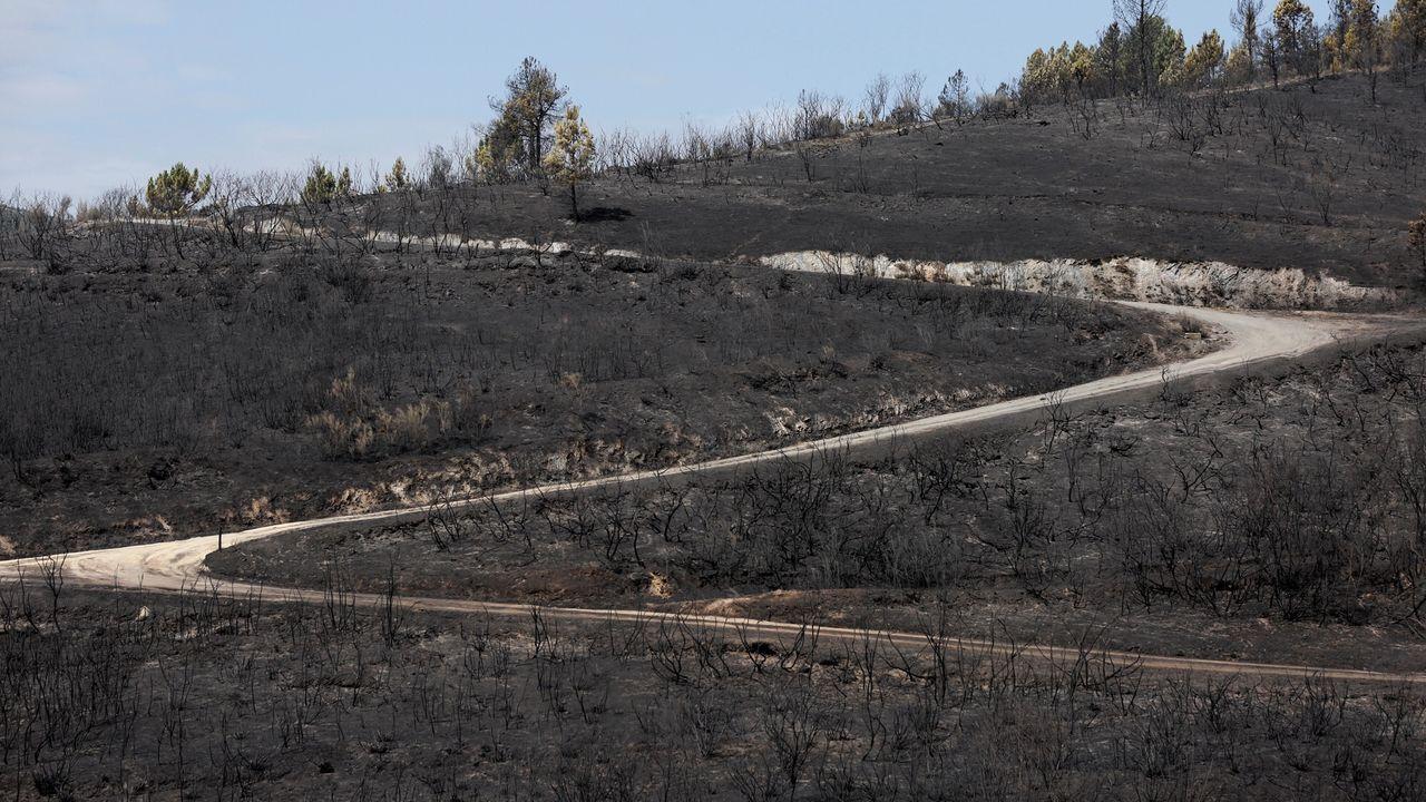 Restos del incendio en A Gudiña, el más grave del fin de semana