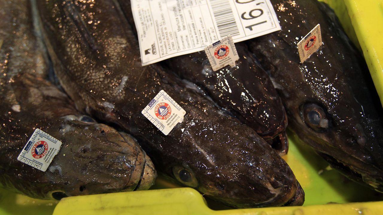 Merluzas frescas de Puerto de Celeiro, etiquetadas con el sello de Friend of the Sea al que se alude en el reportaje de Eurofish Magazine