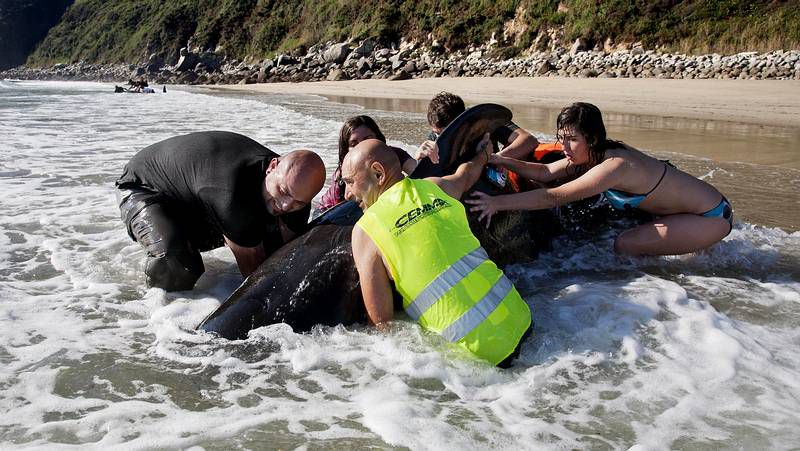 Los delfines llegaron muertos el sábado y el domingo.