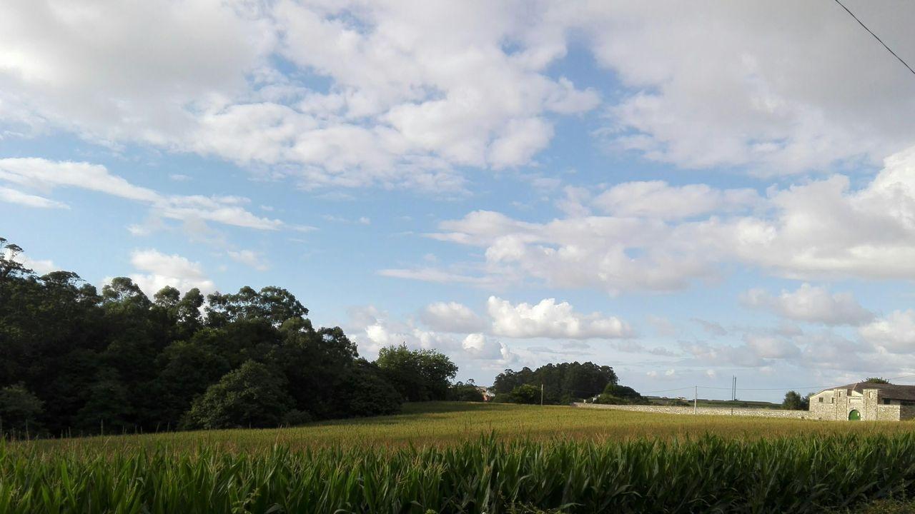 Finca de Casariego, en el municipio de Tapia, donde se cosechó maíz hace 400 años y aún se cultiva actualmente