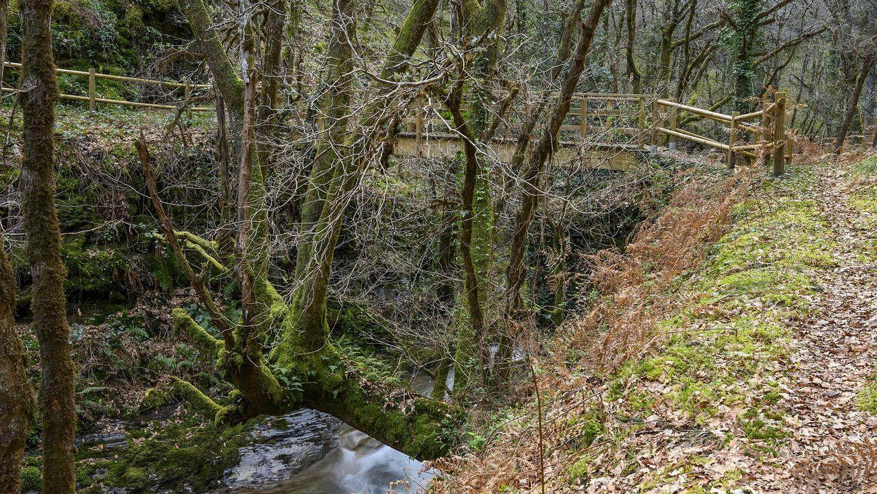 Un tramo del camino cerca del cauce del río Loureiro
