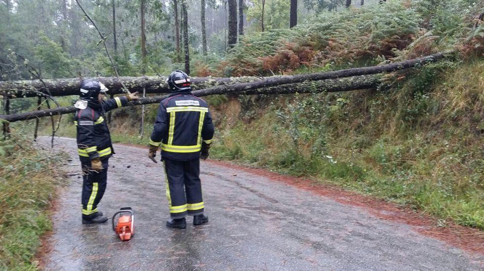 Operarios municipales retiran la rama de un árbol caído en el parque de San Caetano.
