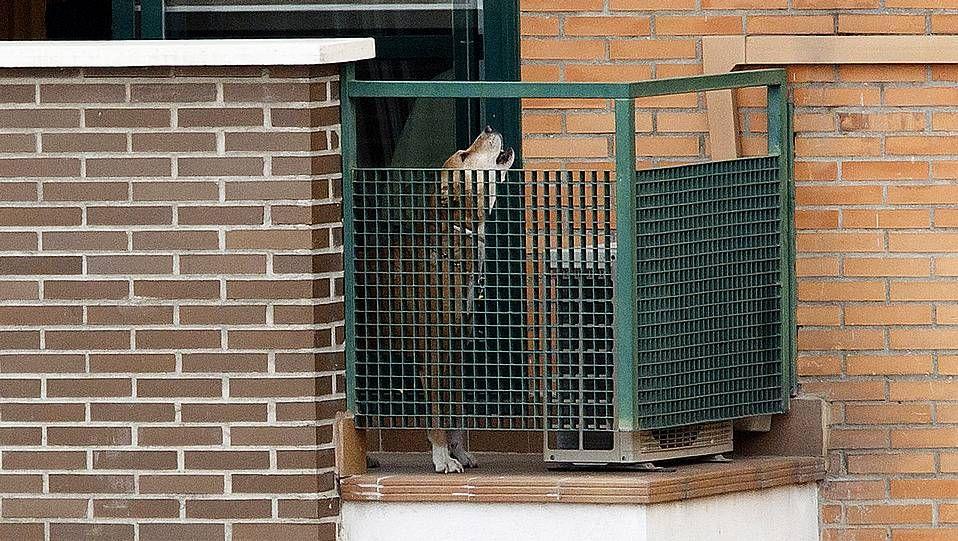 España es el país de Europa que más abandona a sus mascotas.Excalibur, el perro de Teresa Romero, fue sacrificado para evitar posibles riesgos