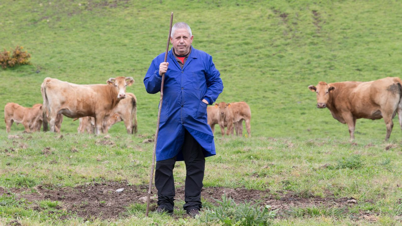 Adolfo Cabarcos, en uno de los prados afectados por el jabalí.