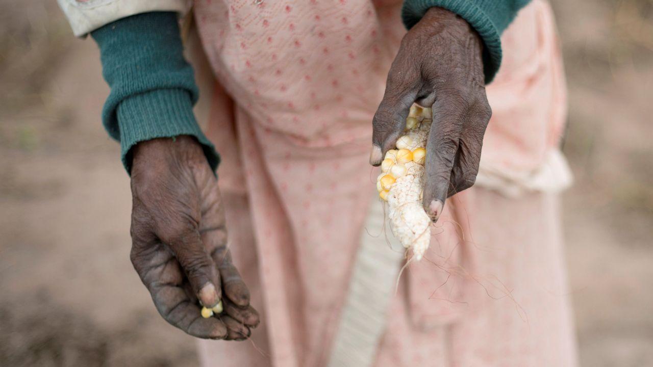 La Asociación de Vecinos de Cambre Afectados por Infraestructuras se concentra este sábado en O Temple en contra de la Vía Ártabra.Una mujer intenta plantar maíz en una huerta del sur de África.