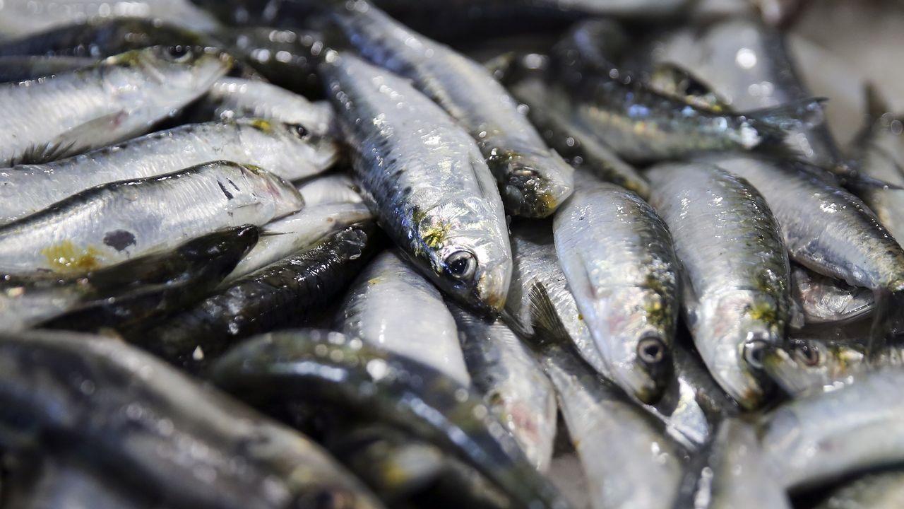 El precio de la sardina da un esprint hacia San Xoán.Cabanas, una fiesta a la coruñesa. Con playa y juventud, A Madalena acogerá 98 hogueras en una celebración similar a la de A Coruña