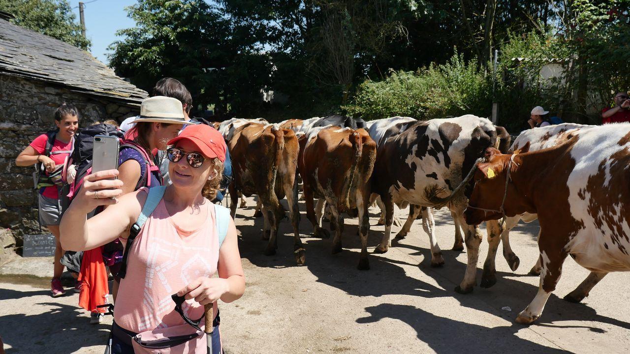 Es momento para un selfie con estas vacas tan fotogénicas